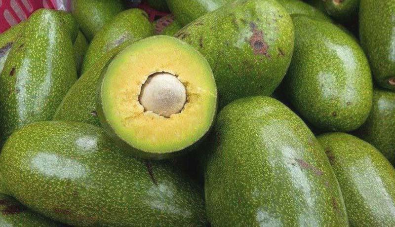 Mua khi du lịch Đà Lạt Bơ sáp dẻo ngon là thứ trái cây cần mua
