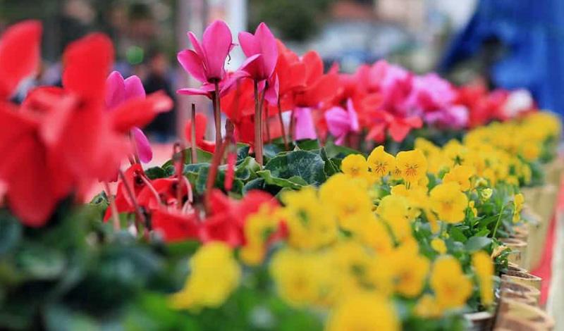 Đà Lạt nổi tiếng với những loại hoa khoe sắc