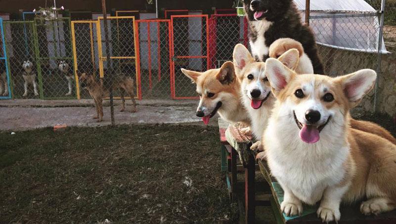 Đại điểm chụp hình ở Đà Lạt khu vườn cún soái đẹp rạng ngời