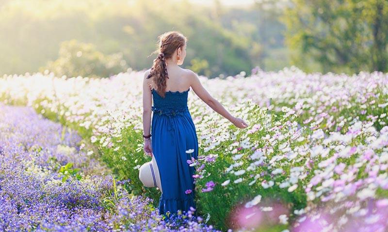 Đại điểm chụp hình ở Đà Lạt F cánh đồng hoa