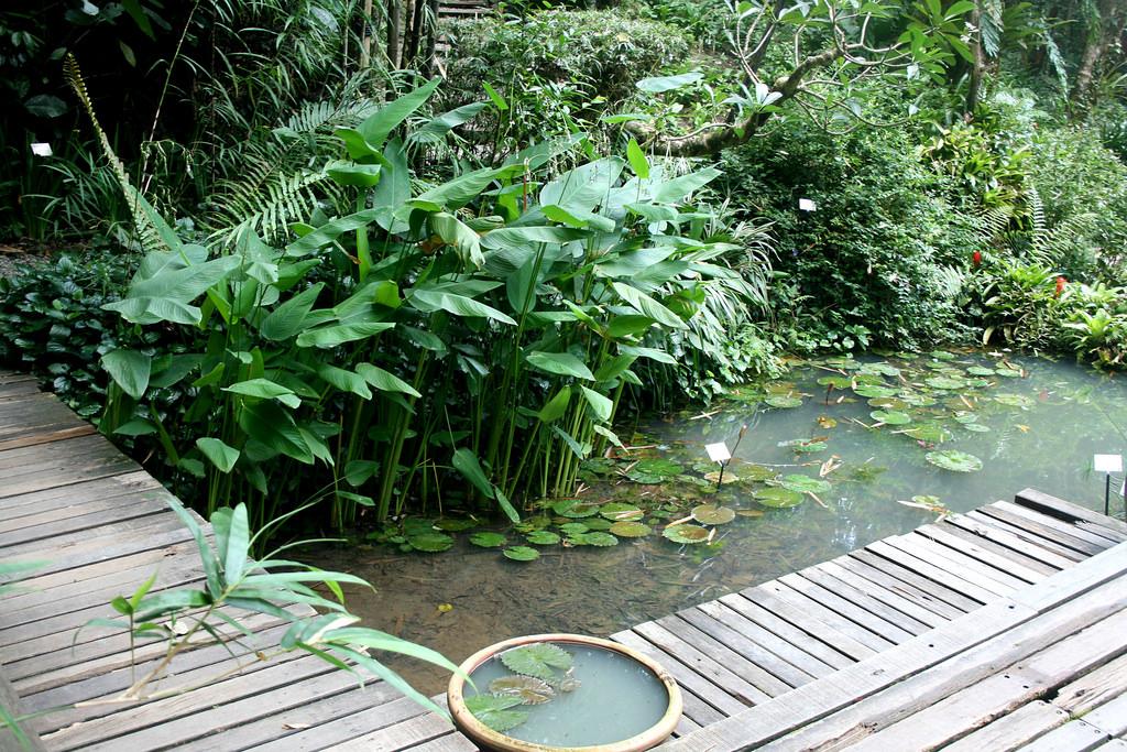 Khu vườn nhiệt đới Tropical Spice Garden