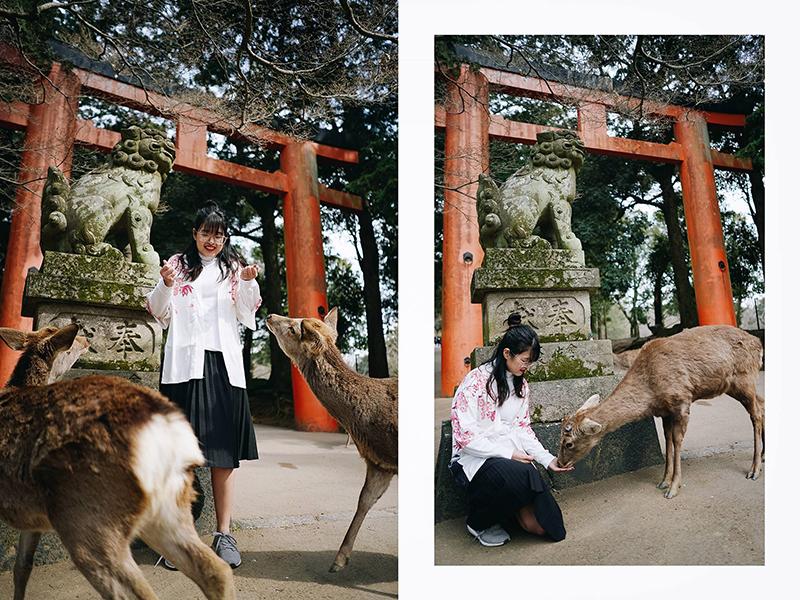 Du lịch tự túc Nhật Bản công viên Nara