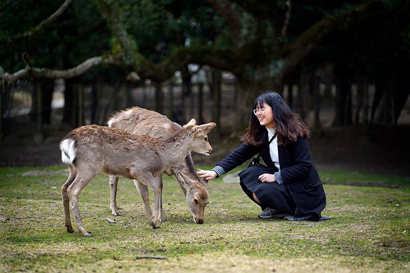 Du lịch tự túc Nhật Bản nara park