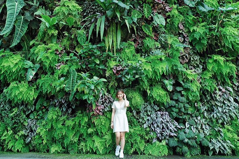 Du lịch tự túc Singapore - Malaysia - Cloud Forest