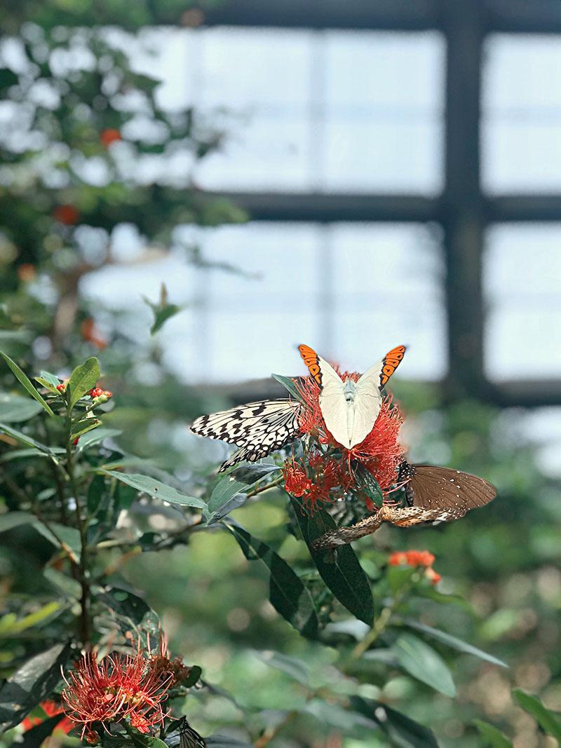 Vườn bướm Entopia