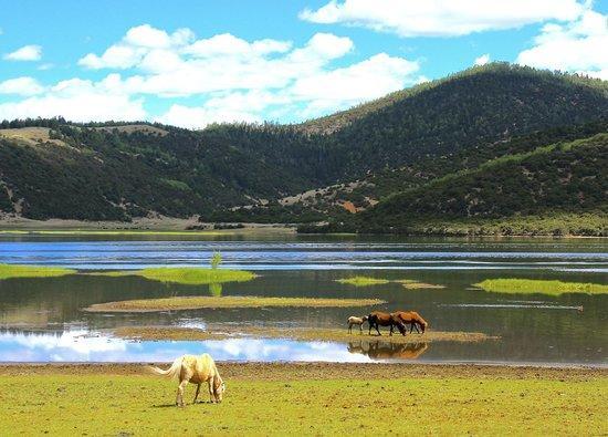Vườn quốc gia Pudacuo