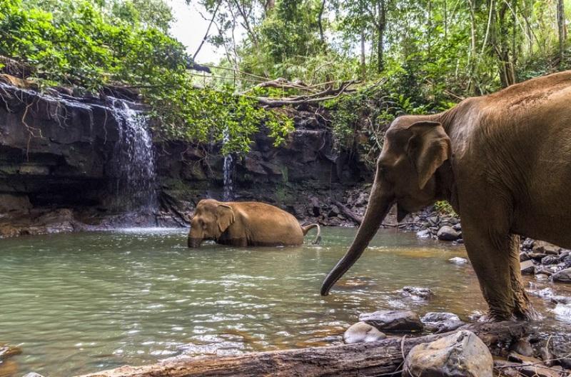 Đi chơi với voi Mondulkiri