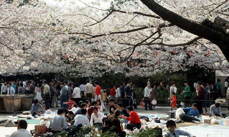Đi picnic vào mùa xuân