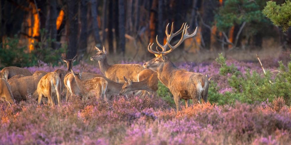 Khám phá vườn quốc gia Hoge Veluwe