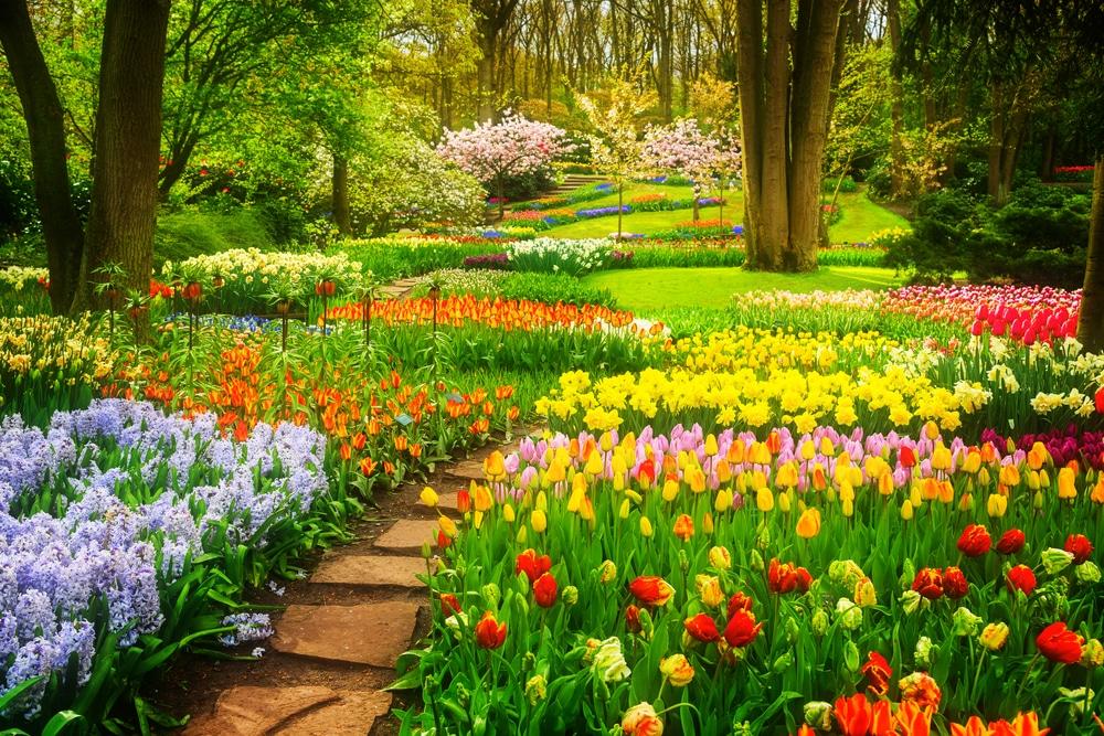 Dạo quanh vườn hoa của châu Âu