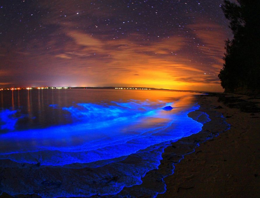 Ngăm Plankton ở Koh Rong