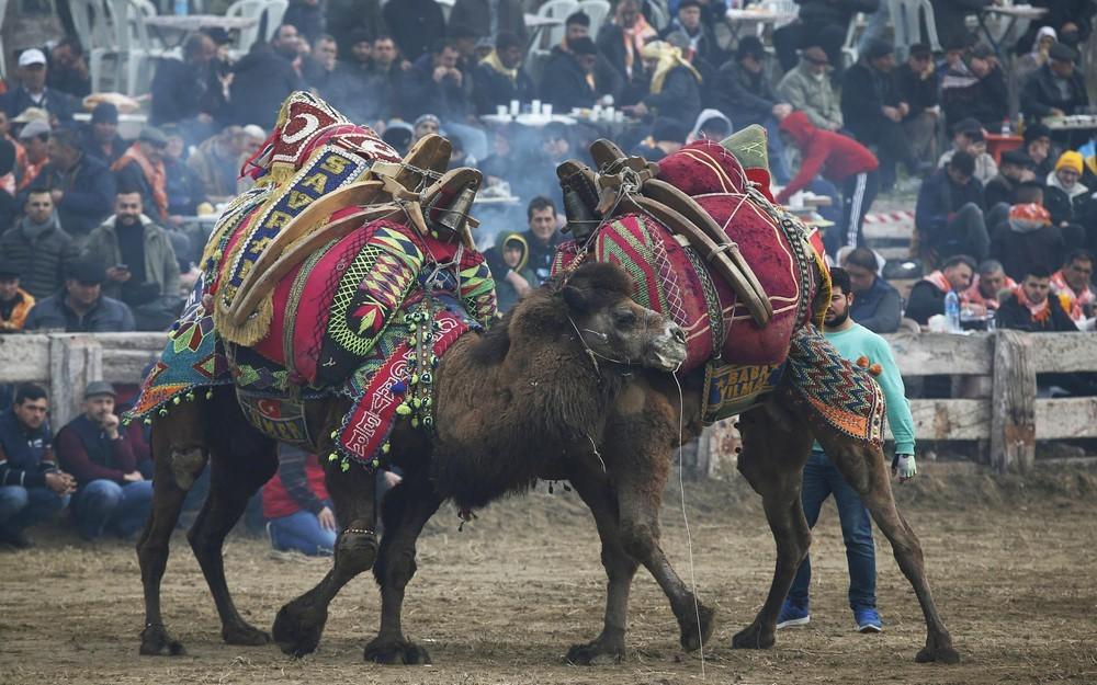 lễ hội ở thổ nhĩ kỳ