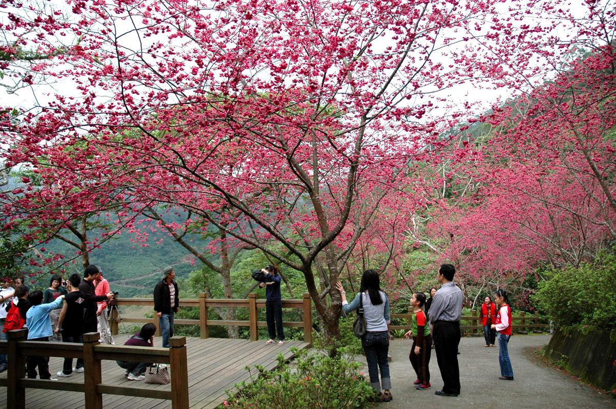 Lễ hội hoa Dương Minh Sơn